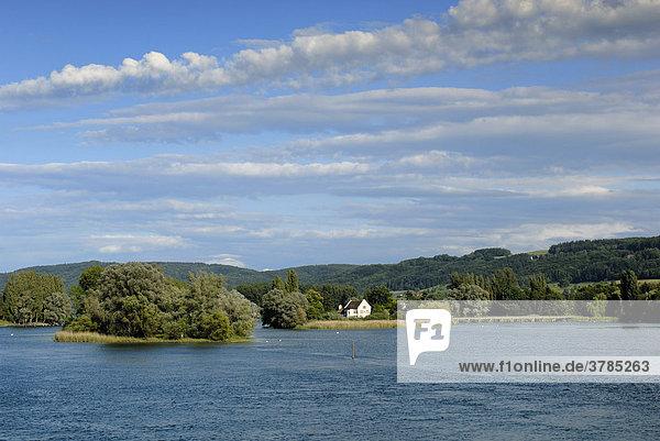 Rheinlandschaft - Insel Werd bei Stein am Rhein - Kanton Schaffhausen  Schweiz Europa