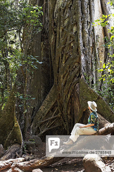 Würgefeige (Ficus subgenus Urostigma)  Nationalpark Rincon de la Vieja  Guanacaste  Costa Rica