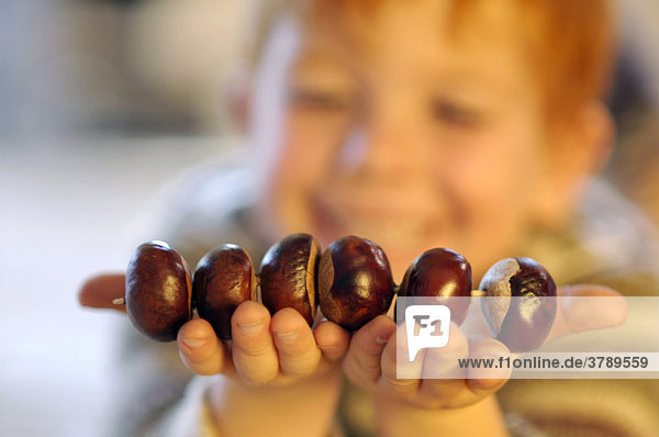 Child is doing handcrafts tinkers with chestnuts in the autumn chestnut figurs