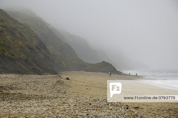 Jurassic Coast Klippen bei Charmouth nahe Lyme Regis Dorset East Devon Coast England