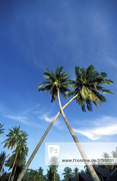 Palme Kreuz