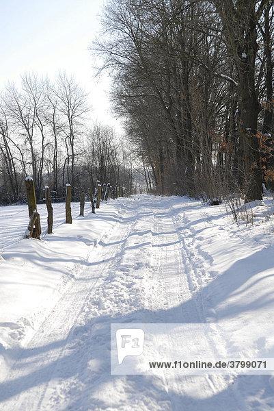 Path in winter landscape