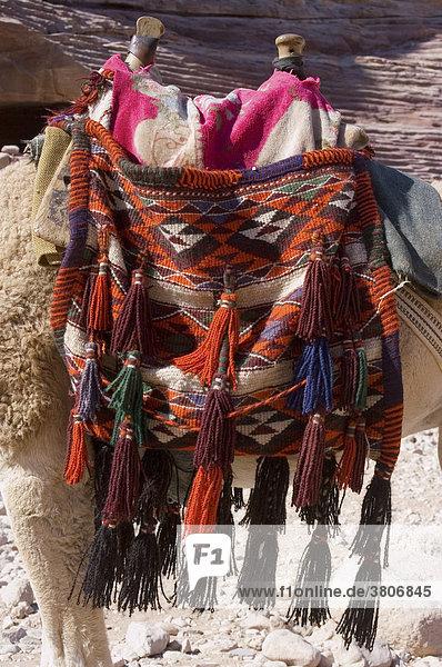 Jordan Petra camels for riding with saddle