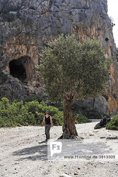 Olivenbaum und Wanderin in Agiofarango-Schlucht  Südkreta  Kreta  Griechenland