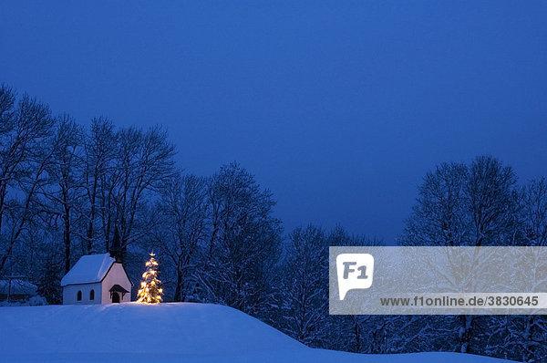 Chapel in Winkl near Fleck south of Bad Toelz in the Isartal Isar valley Upper Bavaria Germany illuminated Christmas tree