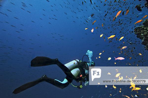 Middle East Egypt Red Sea scubadiver