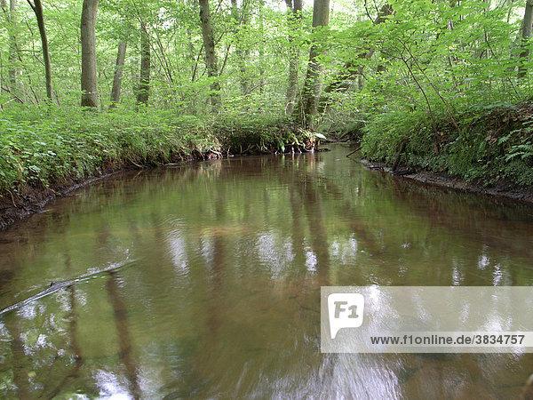 Landscape to eitzener brook in bienenbuettel germany