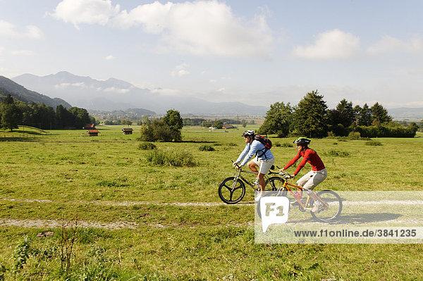Radfahrer im Loisachmoor bei Pessenbach vor Herzogstand und Heimgarten  Oberbayern  Bayern  Deutschland  Europa