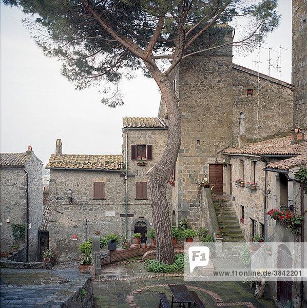 Ein im Ort hoch gelegener Platz mit einem alten Baum  Bolsena  Umbrien  Italien  Europa