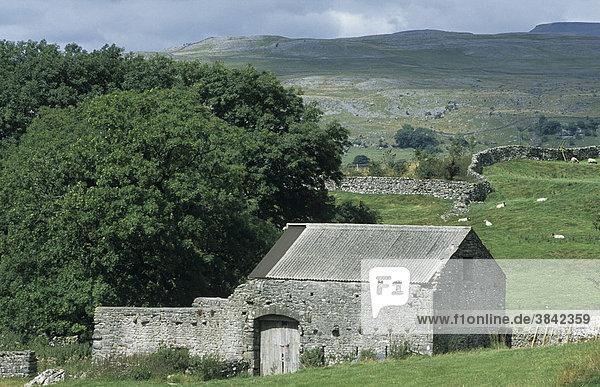 Aus Stein gebaute Scheune in Kalksteinlandschaft in der Nähe von Austwick  North Yorkshire  England  Großbritannien  Europa
