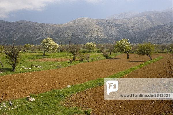 Felder auf Polje oder Karstebene  Tal zwischen Kalkbergen  Lasithi-Hochebene  Ost-Kreta  Griechenland  Europa