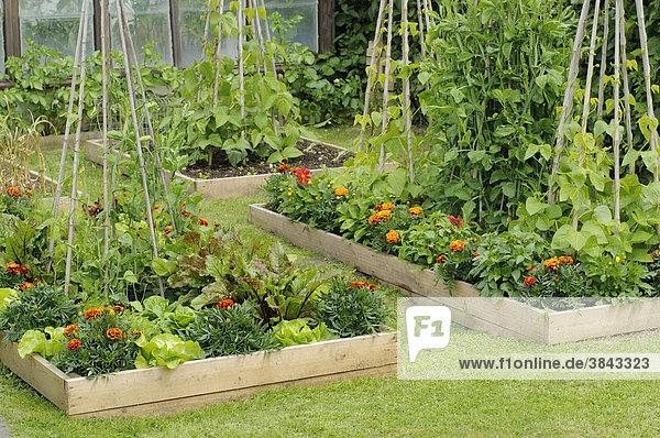 Blumen und Gemüse in Hochbeeten mit Tagetes oder ...