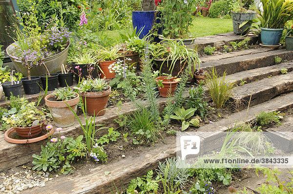 Garten mit Terrasse aus Holzschwellen und Stufen  mit einjährigen Pflanzen  Stauden und Kübelpflanzen bepflanzt  England  Großbritannien  Europa