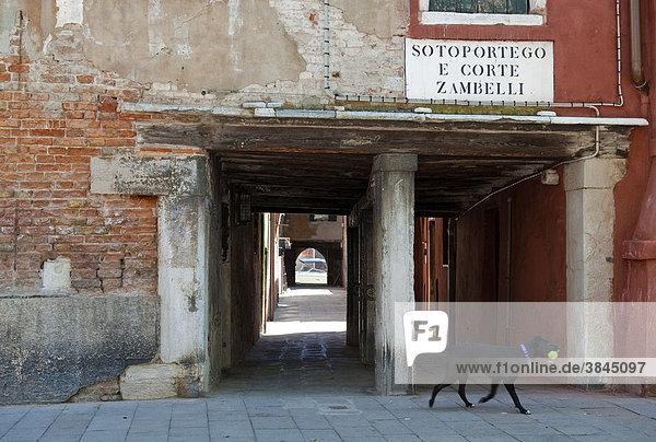 Hund vor dem Durchgang Sotoportego e Corte Zambelli  beim Campo S. Giacomo dall'Orio  Venedig  Venetien  Italien  Europa