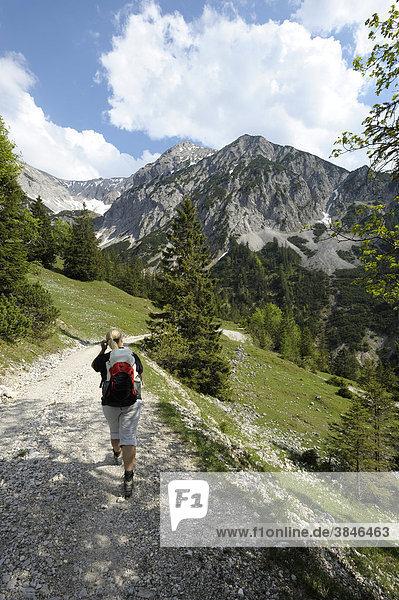 Junge Frau beim Wandern  Abstieg vom Plumsjoch  Rissbachtal  Karwendelgebirge  Tirol  Österreich  Europa