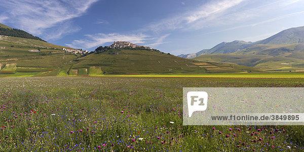 Castelluccio in den Sibillinischen Bergen zur Wildblumensaison  Piano Grande Plateau  Umbrien  Italien  Europa