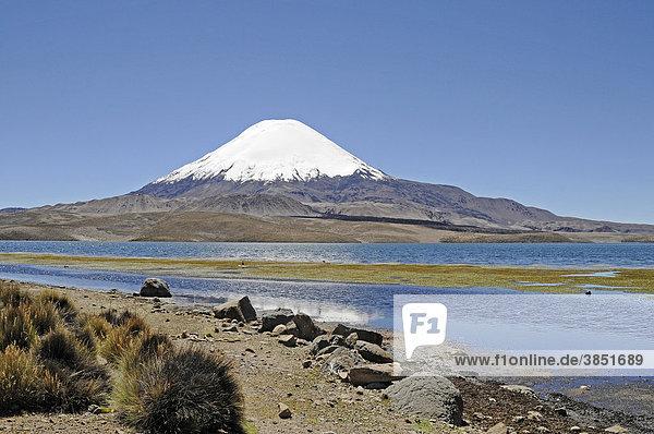 Parinacota  Vulkan  Lago Chungara  See  Lauca Nationalpark  Altiplano  Norte Grande  Nordchile  Chile  Südamerika