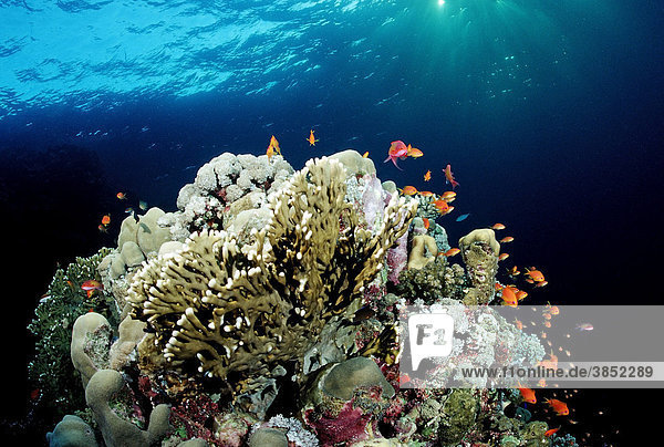 Coral reef at sunset  Red Sea  Sudan