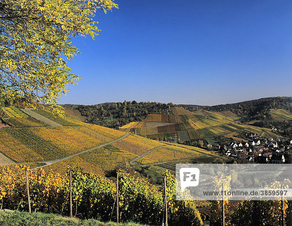 Weinberge im Herbst bei Uhlbach  Baden-Württemberg  Deutschland  Europa