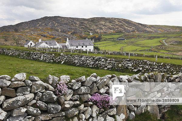 Gehöft  Three Castle Head  Mizen Head Peninsula  West Cork  Irland  Britische Inseln  Europa