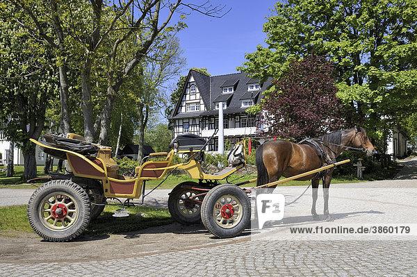 Pferdefuhrwerk als öffentliches Verkehrsmittel auf der autofreien Insel Hiddensee  Landkreis Rügen  Mecklenburg-Vorpommern  Deutschland  Europa