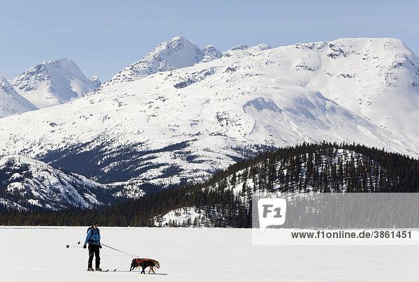 Frau beim Skijöring  Schlittenhunde ziehen Langläufer  Hundesport  Alaskan Huskies  gefrorener Lake Lindeman  Berge dahinter  Küstengebirge  Chilkoot Pass  Chilkoot Trail  Yukon Territory  British Columbia  Kanada