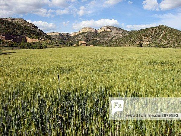 Rubielos de Mora country  Gudar mountains  Teruel province  Aragon  Spain  Europe