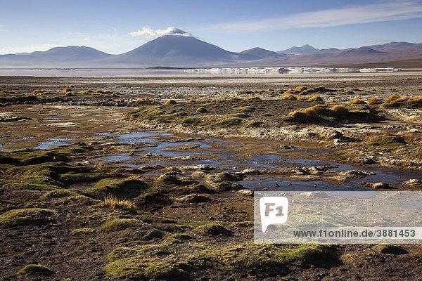 Laguna Colorada  auf dem bolivianischen Altiplano  Bolivien  Südamerika