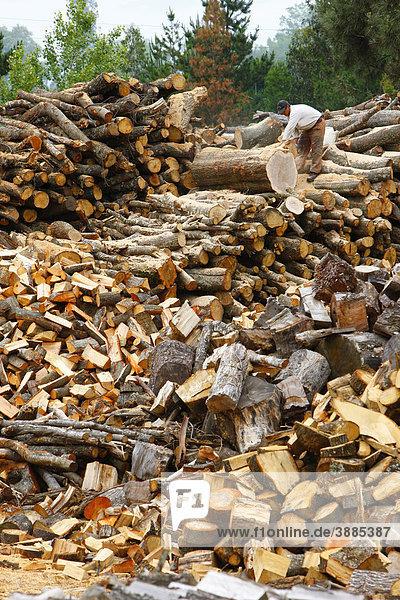Brennholz,  Region Bio-Bio,  Chile,  Südamerika
