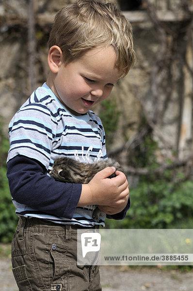Junge hält eine junge Katze im Arm,  Europäisch Kurzhaar-Katze