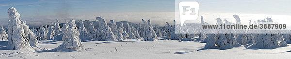 Brockenpanorama  Winter am Brocken im Harz  Blocksberg  Nationalpark Harz  Sachsen-Anhalt  Deutschland  Europa  Europa Brockenpanorama, Winter am Brocken im Harz, Blocksberg, Nationalpark Harz, Sachsen-Anhalt, Deutschland, Europa, Europa