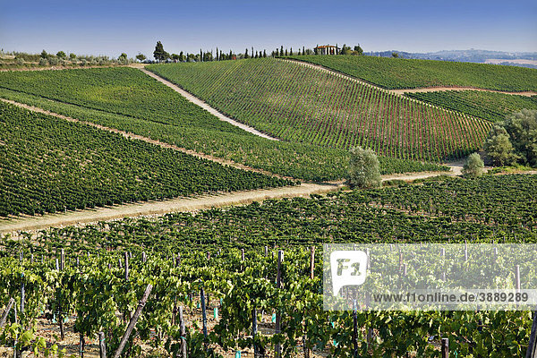 Weinberge in der Toskana  Italien  Europa