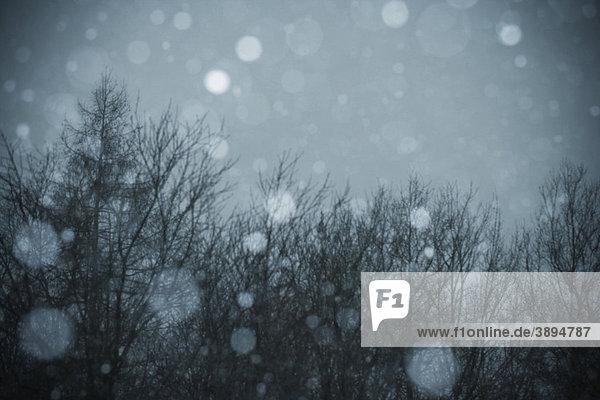 Schneegestöber  Blitzaufnahme am Abend