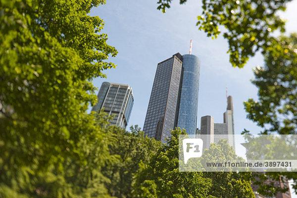 Main Tower hinter Bäumen  Frankfurt am Main  Deutschland