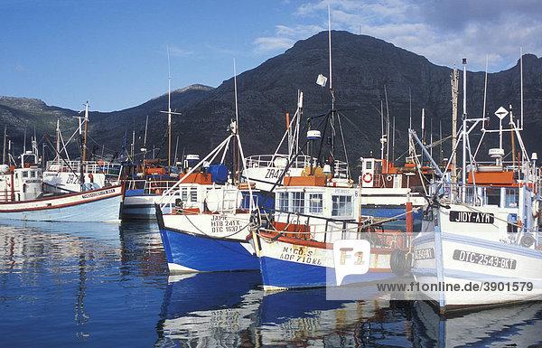 Fischkutter im Hafen von Hout Bay  Kapstadt  Westkap  Südafrika  Afrika