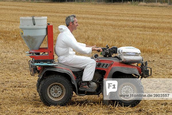 Quad bike spreading slug pellets on stubble  in preparation for drilling with oilseed rape  Berkshire  England  United Kingdom  Europe  august