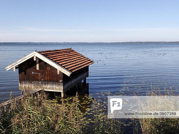 Kleiner Bootsschuppen  Chiemsee  Chiemgau  Oberbayern  Deutschland  Europa