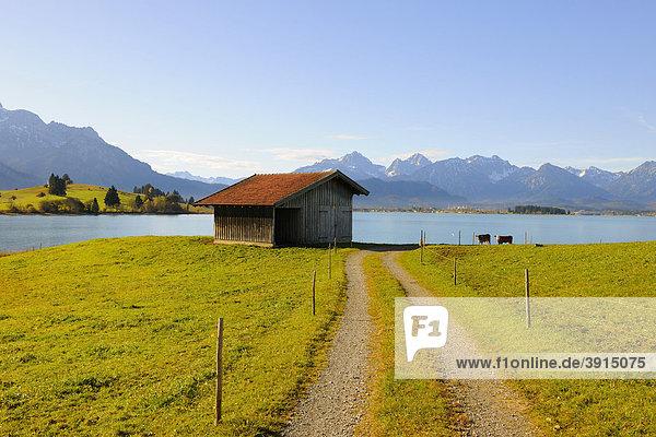 Forggensee nahe Füssen  Herbst  Ostallgäu  Allgäu  Oberbayern  Bayern  Deutschland  Europa