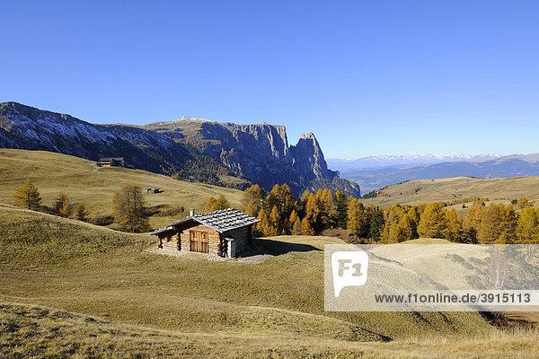 Seiser Alm mit Schlern  Dolomiten  Südtirol  Italien  Europa