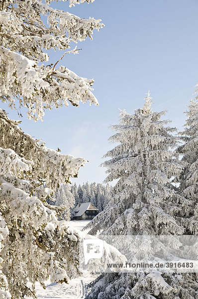 Winterlandschaft im Schwarzwald  Baden-Württemberg  Deutschland  Europa