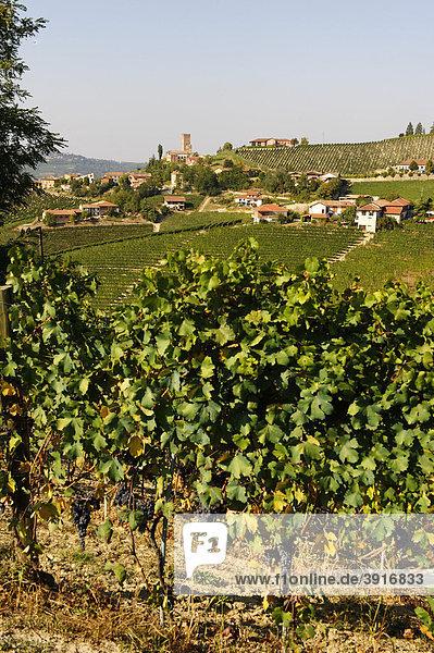 Barbaresco  Provinz Cuneo  Piemont  Italien  Europa