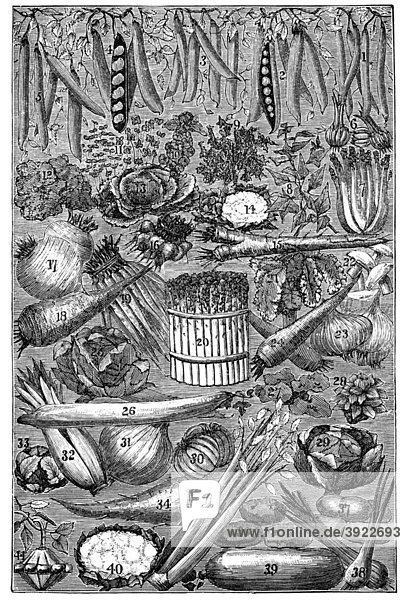 Gemüse  historische Illustration aus: Marie Adenfeller  Friedrich Werner: Illustriertes Koch- und Haushaltungsbuch  Friedrichshagen 1899-1900  Tafel 2  S. 136/137