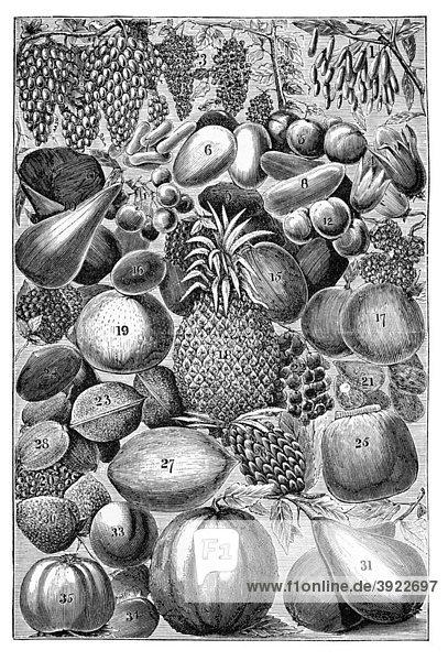 Obst  historische Illustration aus: Marie Adenfeller  Friedrich Werner: Illustriertes Koch- und Haushaltungsbuch  Friedrichshagen 1899-1900  Tafel 8  S. 1032-1033