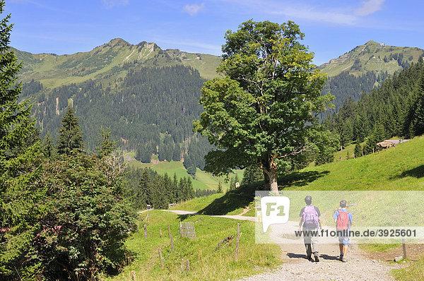Wandern auf dem Panoramaweg im Bärgunttal  Bärgundtal  Kleinwalsertal  Vorarlberg  Allgäuer Alpen  Österreich  Europa