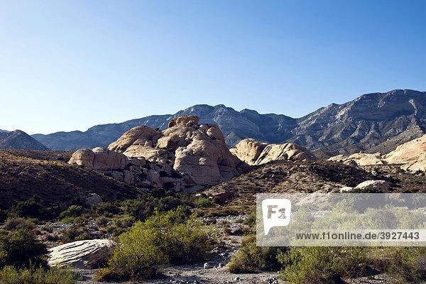 Red Rock Canyon  Nevada  USA