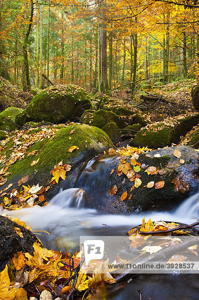 Gertelbach  Gertelbachschlucht  Bühl  Bühlertal  Schwarzwald  Baden-Württemberg  Deutschland  Europa Gertelbach, Gertelbachschlucht, Bühl, Bühlertal, Schwarzwald, Baden-Württemberg, Deutschland, Europa