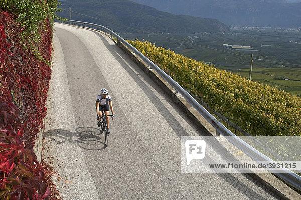 Rennrad-Fahrerin auf der Südtiroler Weinstraße  Kalterer See  Südtirol  Italien  Europa