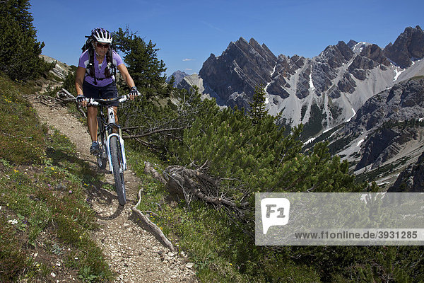 Mountain bike rider on a trail in the Parco naturale Fanes-Sennes-Braies  Veneto  South Tyrol  Italy  Europe