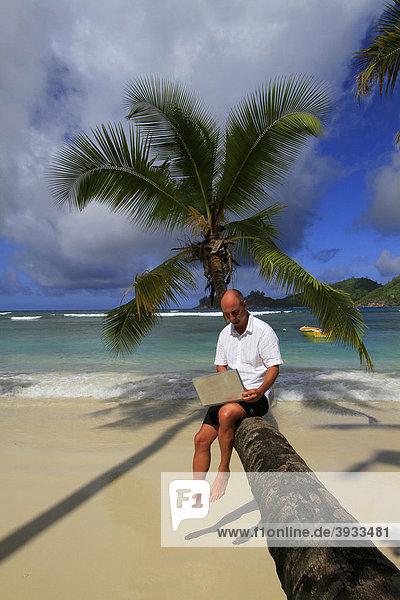 Mann mit Laptop auf Kokospalme  Baie Lazare  Insel Mahe  Seychellen  Afrika  Indischer Ozean