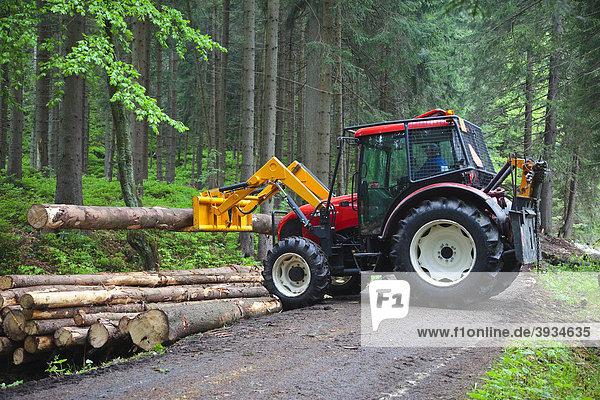 Ein Traktor hebt gefällte Baumstämme zu einem Haufen auf einem Weg im Wald